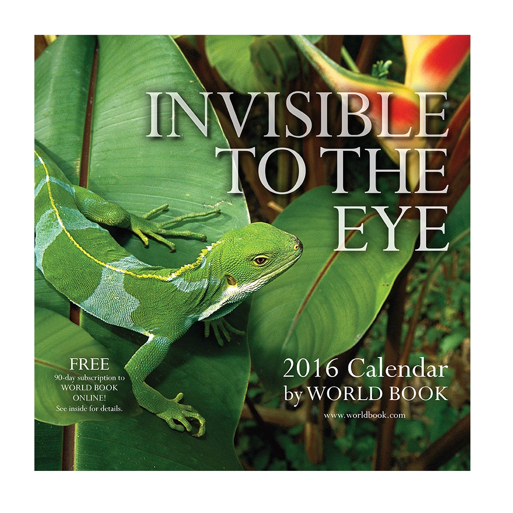 Invisible to the Eye 2016 Wall Calendar